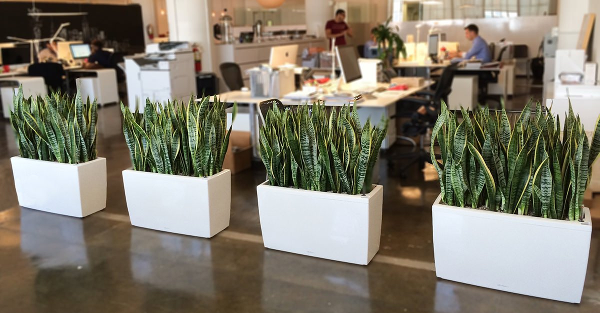 Office Decoration With Plants Give Your Place An Environment Friendly